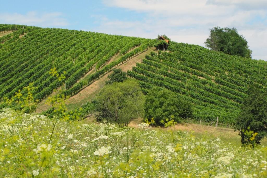St. Anna am Aigen - Weingärten