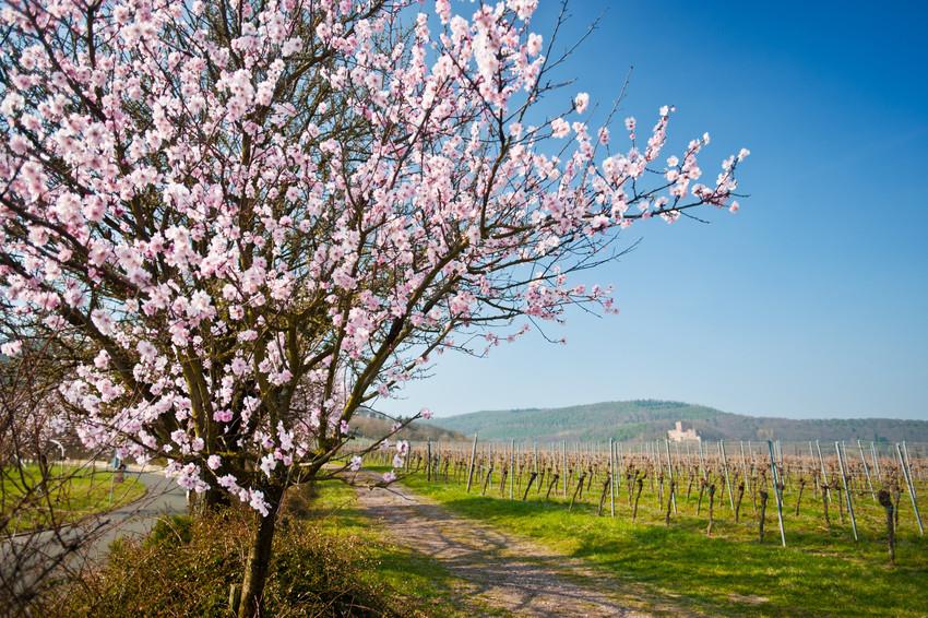 © Rheinland-Pfalz Tourismus (Flickr.com)